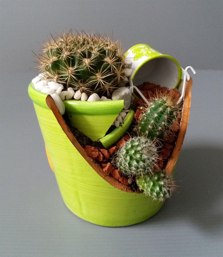 Composizioni piante vere
